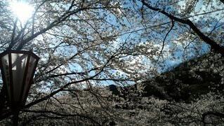 自然,空,花,桜,季節,花見,影,光,風,香り,桜見,春風