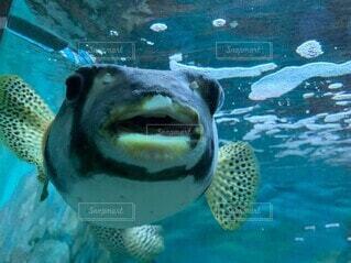 水の下で泳ぐ魚の写真・画像素材[3646184]