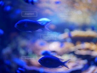 水族館の写真・画像素材[3648682]