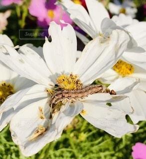 食事中の幼虫の写真・画像素材[3651845]