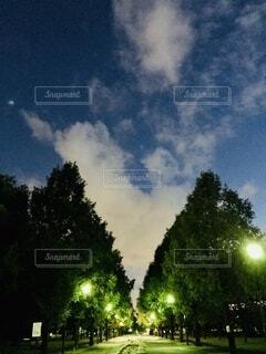 夜の木と光と空の雲の写真・画像素材[3654487]