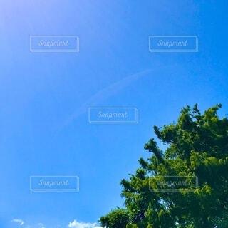 木と空と太陽光の写真・画像素材[3664540]