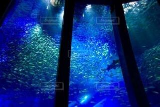 水族館の写真・画像素材[3672453]