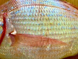 鯛のカラフルな鱗の写真・画像素材[3673910]