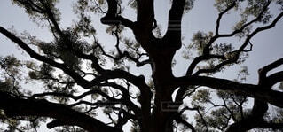 大きな木の影の写真・画像素材[3675790]