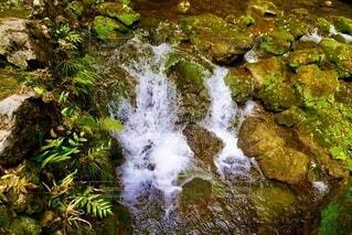 湧水と苔の写真・画像素材[3682982]