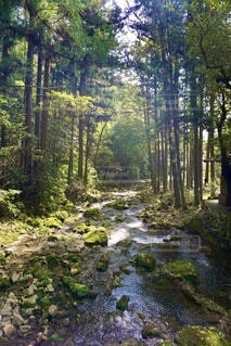 森の中の小川の写真・画像素材[3683376]