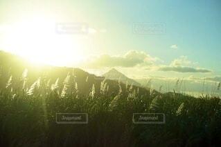 太陽と山と植物の写真・画像素材[3691010]