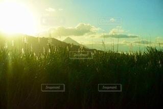 日光と草木の写真・画像素材[3691011]