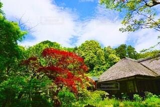 木の中の小さな家の写真・画像素材[3709143]