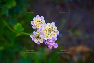 花のクローズアップの写真・画像素材[3709142]