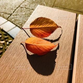 ベンチの上の紅葉の写真・画像素材[3715995]