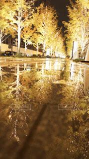 雨,屋外,水面,樹木,イルミネーション,クリスマス,梅田,グランフロント大阪,街路灯,シャンパンゴールド,グランフロントクリスマス