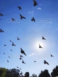 空を飛んでいる鳥の群れの写真・画像素材[3651766]