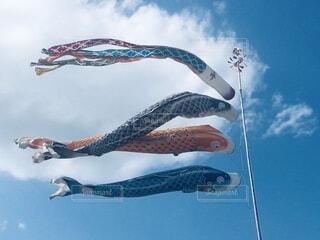 空を飛んでいる鳥の写真・画像素材[3710572]