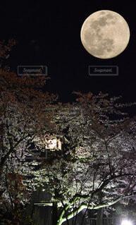 桜と満月の写真・画像素材[3718195]