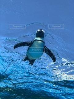 空飛ぶペンギンの写真・画像素材[3652583]