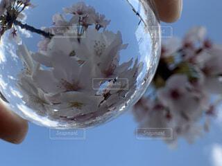 空,花,桜,屋外,青空,景色,手持ち,手元,レンズボール