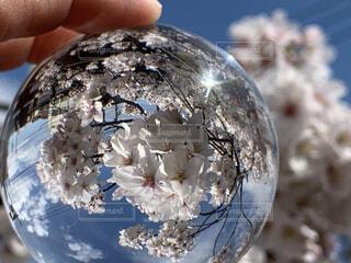 花,桜,青空,手持ち,手元,太陽の光,レンズボール