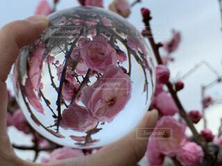 空,花,木,屋外,景色,手持ち,手元,レンズボール