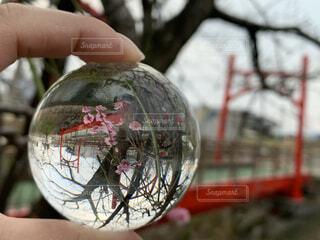 空,屋外,手,景色,手持ち,樹木,赤い橋,手元,レンズボール