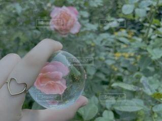 花を持つ手の写真・画像素材[3653145]