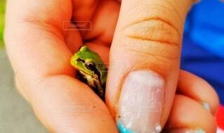 カエルを捕まえたの写真・画像素材[3670337]
