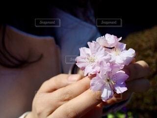 花,桜,ピンク,手,手持ち,人物,人,ポートレート,ライフスタイル,枝垂れ桜,草木,手元,さくら,ブロッサム