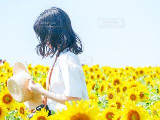 広いひまわり畑の中で麦わら帽子を持っている白い服の女の子の写真・画像素材[4297089]