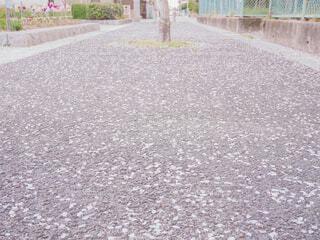 桜の花びらが散る散歩道の写真・画像素材[4300695]