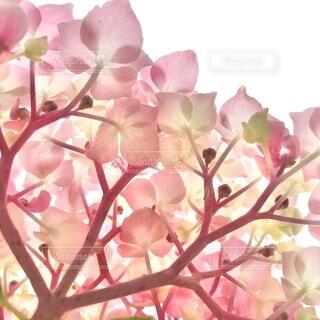 花のクローズアップの写真・画像素材[3659138]