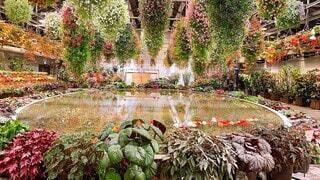 圧巻の花園の写真・画像素材[3700493]