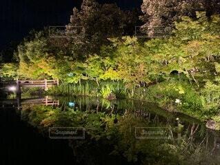 夜の池の写真・画像素材[3700498]