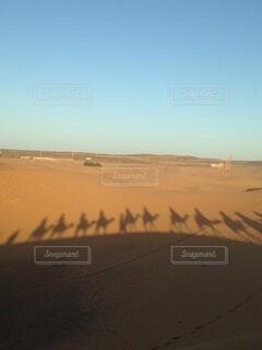 ラクダの列の写真・画像素材[3705333]