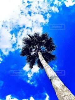 木の隣にあるヤシの木の群の写真・画像素材[3829483]