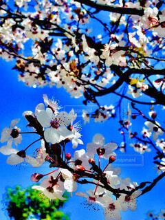 木の枝に花瓶の写真・画像素材[4239595]