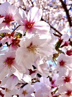 花のクローズアップの写真・画像素材[4279512]