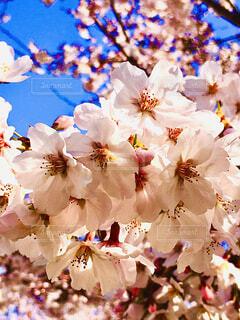 花のクローズアップの写真・画像素材[4280582]