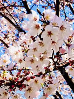 木に花の花瓶の写真・画像素材[4280707]