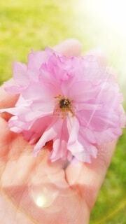 花,花びら,手持ち,人物,ポートレート,ライフスタイル,手元