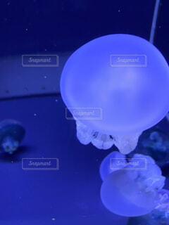 水の中のクラゲの写真・画像素材[3687329]