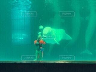 魚の写真・画像素材[3701191]