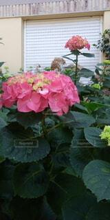 花,屋外,花びら,手持ち,人物,ポートレート,ライフスタイル,手元,ガーデン,フローラ