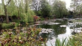 自然,花,水面,池,景色,手持ち,樹木,人物,ポートレート,ライフスタイル,草木,手元