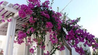 花,ピンク,カラー