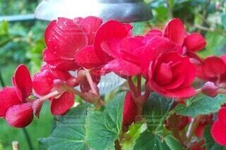 花,花びら,手持ち,人物,ポートレート,ライフスタイル,手元,フローラ