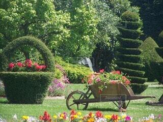 花,屋外,草,手持ち,樹木,人物,新緑,ポートレート,ライフスタイル,草木,手元,日中,ガーデン