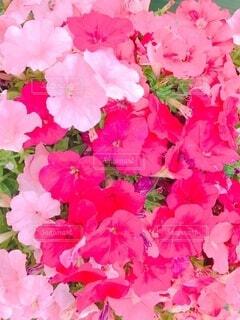 花のクローズアップの写真・画像素材[3665267]