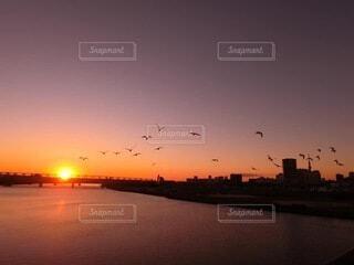 自然,風景,空,鳥,太陽,朝日,正月,お正月,日の出,新年,初日の出,荒川河川敷