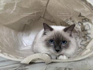 洗濯物、衣類入れを横倒し落ち着く猫の写真・画像素材[3857915]